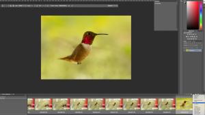 Hummingbird_Curves